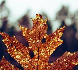 leaf-problem